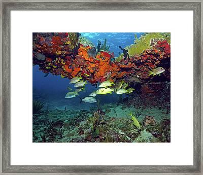 Schooling Fish At Calf Rock Framed Print