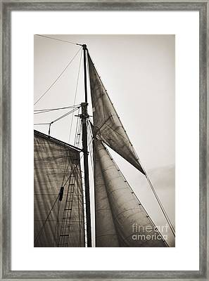 Schooner Pride Tall Ship Yankee Sail Charleston Sc Framed Print