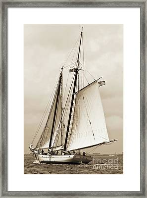 Schooner Sailboat Spirit Of South Carolina Sailing Framed Print by Dustin K Ryan