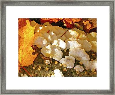 Schrooms And Shadows Framed Print by Randy Rosenberger