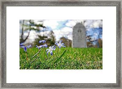 Scilla In Cemetery Framed Print by Charline Xia