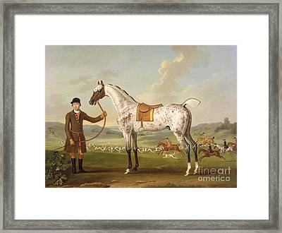 Scipio - Colonel Roche's Spotted Hunter Framed Print by Thomas Spencer