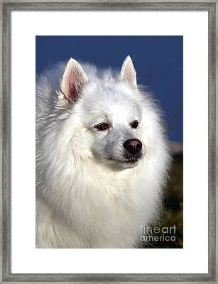 Scooby Framed Print by Olivier Le Queinec