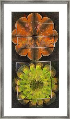 Scoparin Bald Flower  Id 16164-203427-54971 Framed Print