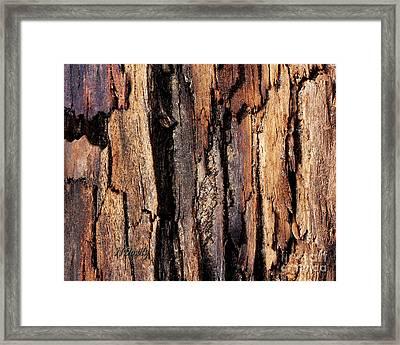 Scorched Timber Framed Print