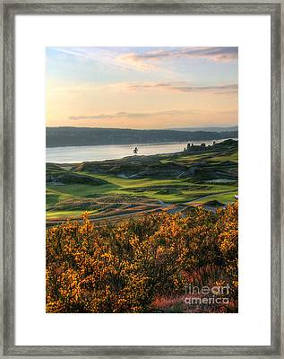 Scotch Broom -chambers Bay Golf Course Framed Print by Chris Anderson