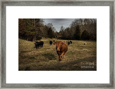 Scotopic Vision 9 - Cows Come Home Framed Print by Pete Hellmann