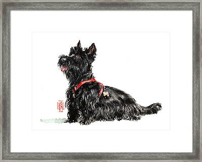Scottie Framed Print by Debra Jones