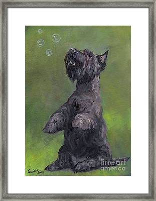 Scottie Likes Bubbles Framed Print by Charlotte Yealey