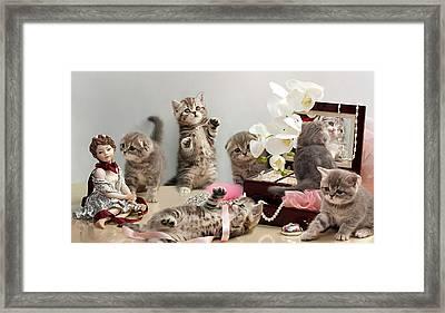 Scottish Fold Cats Framed Print by Evgeniy Lankin