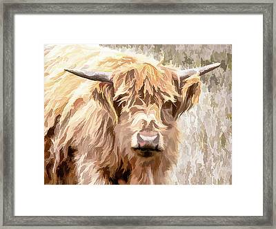 Scottish Highland Cow Framed Print