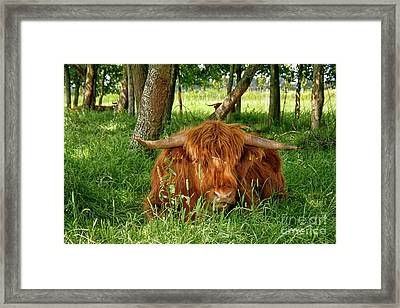 Framed Print featuring the photograph Scottish Higland Cow by Patricia Hofmeester