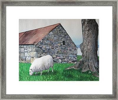 Scottish Sheep Framed Print by Sharon Farber