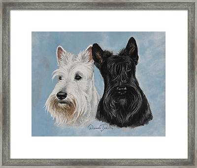 Scottish Terrier Framed Print