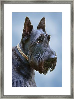 Scottish Terrier Dog Framed Print by Jennie Marie Schell