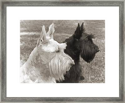 Scottish Terrier Dogs In Sepia Framed Print by Jennie Marie Schell