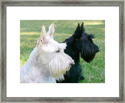 Scottish Terrier Dogs Framed Print by Jennie Marie Schell