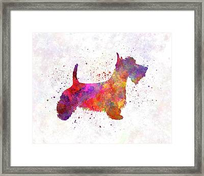 Scottish Terrier In Watercolor Framed Print by Pablo Romero