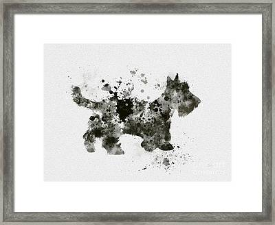 Scottish Terrier Framed Print by Rebecca Jenkins