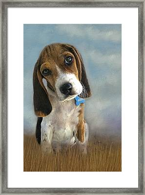 Framed Print featuring the photograph Scout by Steven Richardson