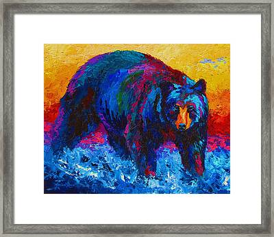 Scouting For Fish - Black Bear Framed Print by Marion Rose