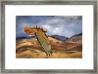 Scouting The Foothills Framed Print
