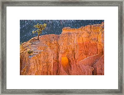Scrappy Little Tree - Bryce Canyon National Park Photograph Framed Print