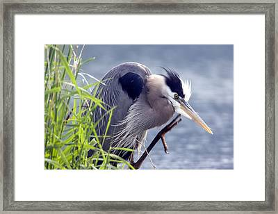 Scratch The Itch Framed Print