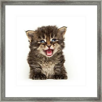 Screamer Framed Print
