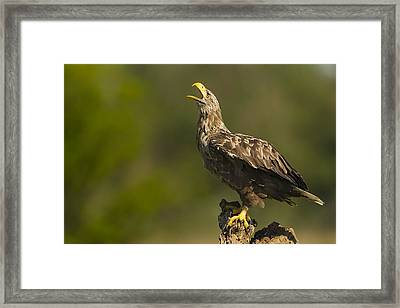 Screaming Framed Print by Alberto Carati