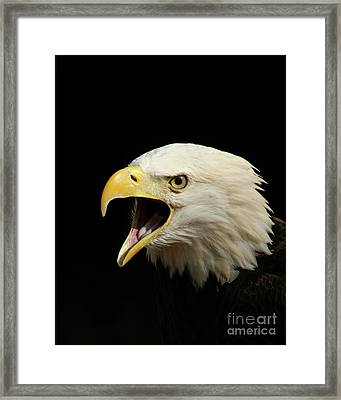 Screaming Eagle Framed Print by Jack Norton
