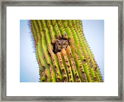 Screech Owl In Saguaro Framed Print