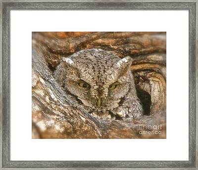 Screech Owl On Spring Creek Framed Print