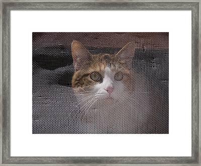 Screened Cat Framed Print