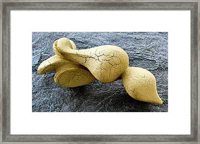 Scroll Shell Framed Print by Lonnie Tapia