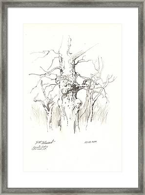 Framed Print featuring the drawing Scrub Oaks In Cottonwood by John Norman Stewart