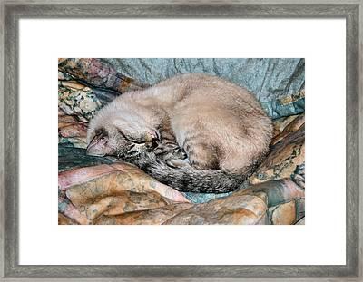 Scruffie Framed Print by Kristin Elmquist