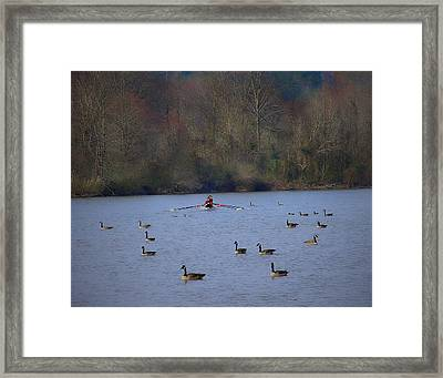 Scullers Among The Geese II Framed Print by Frank Maxwell