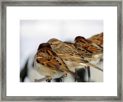 Scuttlebutt  Framed Print by Dianne Cowen
