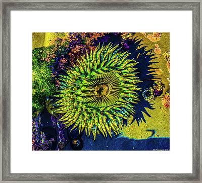 Sea Anemone Framed Print by Jeremy Rickman