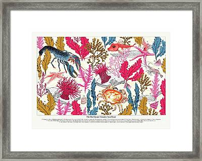 Sea Bed Annotated Framed Print by Jacqueline Colley