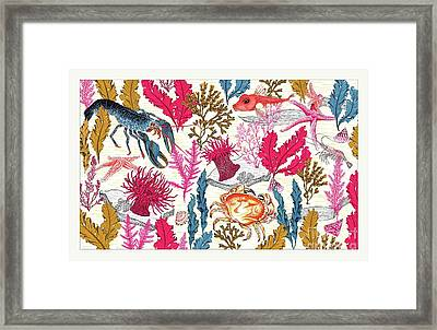 Sea Bed Framed Print by Jacqueline Colley
