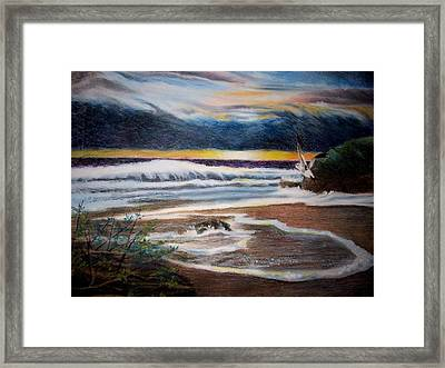 Sea Bird Framed Print by Kathleen Romana