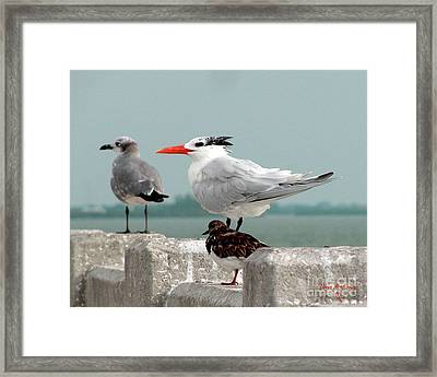 Framed Print featuring the photograph Sea Birds by Donna Brown