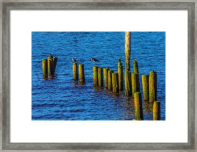 Sea Birds On Old Pier Posts Framed Print by Garry Gay