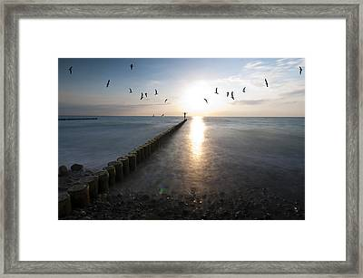 Sea Birds Sunset. Framed Print by Nathan Wright