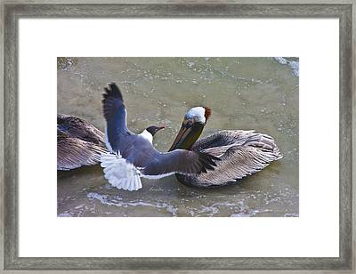Sea Breeze Framed Print by Betsy Knapp