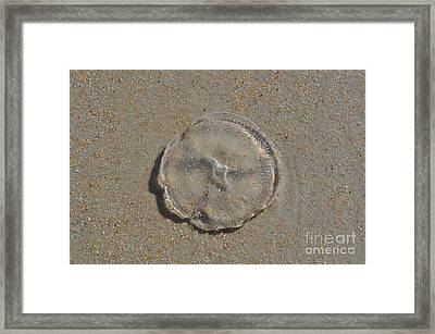 Sea Creatures Framed Print
