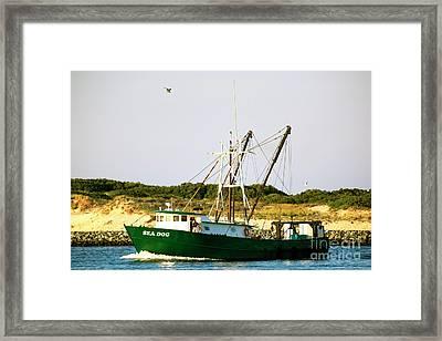 Sea Dog Framed Print by John Rizzuto
