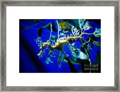 Sea Dragon Framed Print by Brenton Woodruff